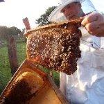 Beitragsbild Honigernte Bienenkiste2014