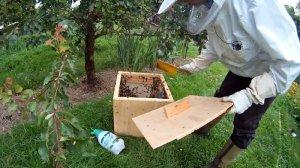 Bienenschwarm einfangen