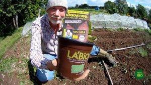 Suesskartoffeln anbauen