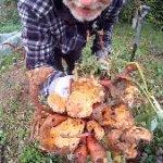 Suesskartofffeln im Garten Beitragsbild