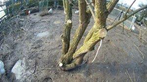 Baumschnitt1