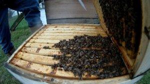 Bienen ueberwintern
