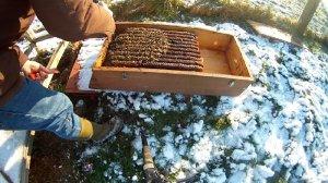 Bienenkiste Oxalsaerue traeufeln