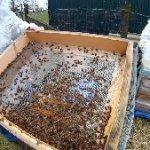 Bienenvoelker ueberwintern Beitragsbild