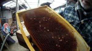 Bienenvolk eingegangen
