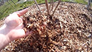 Gärtnern mit Holzhackschnitzeln Beitragsbild