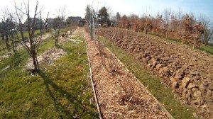 Mulchgarten mit Holzhackschnitzeln