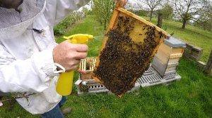Bienen mit Milchsaeure behandeln