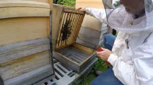 Bienenschwarm im Mai