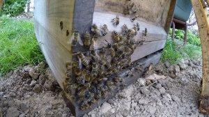 sterzelnde Bienen