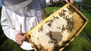 Baurahmen voller Honig