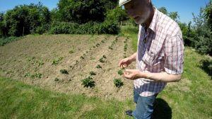 Wann Erdbeeren pflanzen