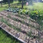 Gärtnern mit Holzhackschnitzeln Was waechst und was waechst nicht Beitragsbild