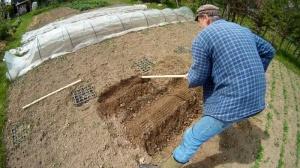Schwarzwurzeln im Garten