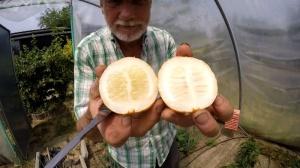 wie schmeckt eine Zitronengurke