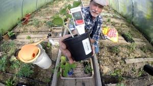 Melonen im Garten anbauen