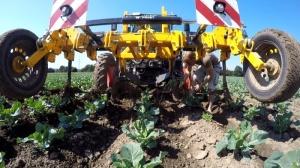 mechanische Unkrautbekaempfung im Bioanbau