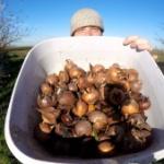 Ein Jahr im Leben eines Mispelbaumes Beitragsbild