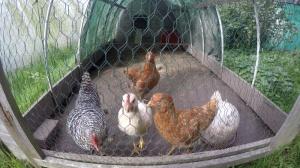 Chickentraktor
