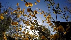 Eine komplette Gartensaison in einem Video Teil 1
