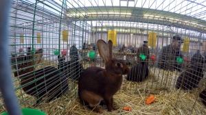 Kaninchenzuechter