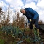 Pestizideinsatz in Deutschland Beitragsbild