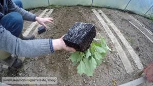 Gewaechshaus bepflanzen