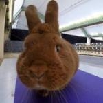 Kaninchen bewerten Beitragsbild