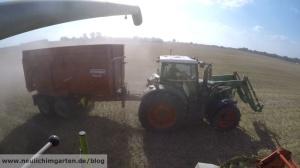 Weizen maehen mit dem Maehdrescher