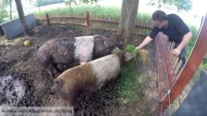Schweine richtig fuettern