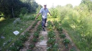 Erdbeerbauer