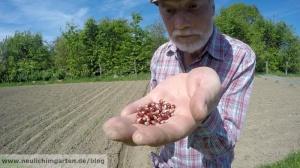 Witzig sieht der Erdbeermais ja schon aus. Wenn die Ernte stimmt, soll mir das gleich sein. :)