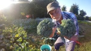 Brokkolitelegramm Beitragsbild