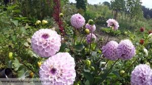 Und wer weder mit Gemuese noch mit Rasen etwas anfangen kann, dem bieten sich Blumen an.