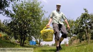 Saubohnen selbst anbauen