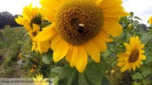Es muessen ja nicht unbedingt diese Blumen sein. Die fuehren nur zu Aerger mit den Nachbarn. :)