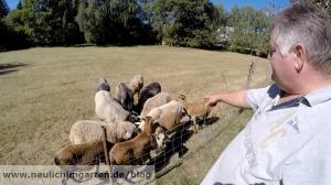 Michael und seine Schafe