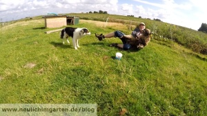 Quessant Schaf fangen