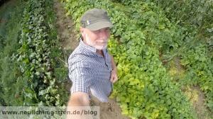 Bohnen im Garten anbauen