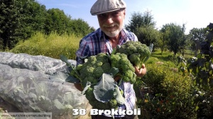 Brokkoli im Garten