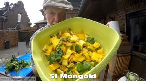 Gelber Mangold
