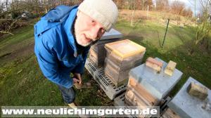 Bienenflug im Januar
