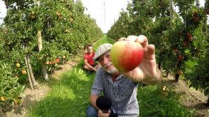 Der perfekte Apfel