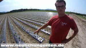 Erdbeerlandwirt