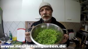 Microgreens ernten