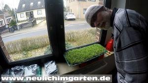 Microgreens gesund und lecker