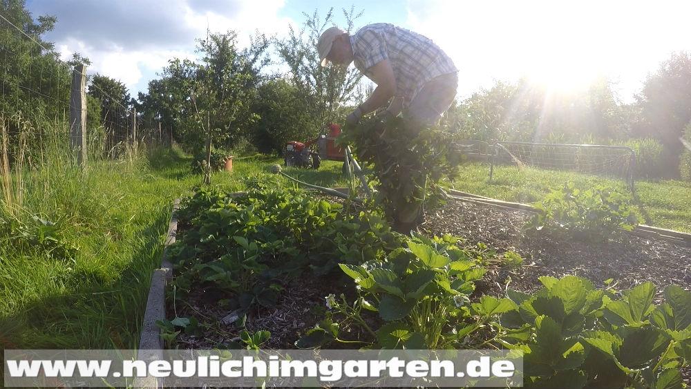 Holzhackschnitzel Im Garten Ein Komplettes Gartenjahr Oder Warum