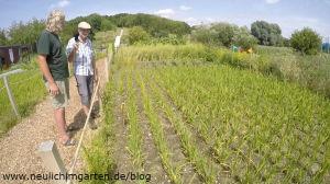 Reis einer der welteit ganz wichtigen Kulturen