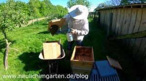 Bienenschwarm richtig einschlagen