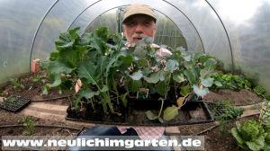 Die richtigen Jungpflanzen kaufen